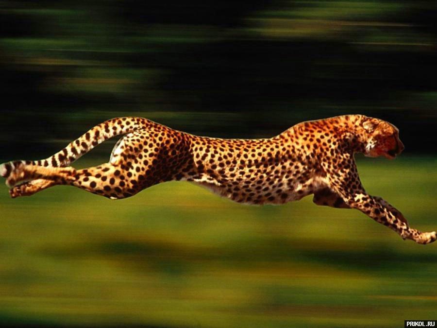 wild-cats-28