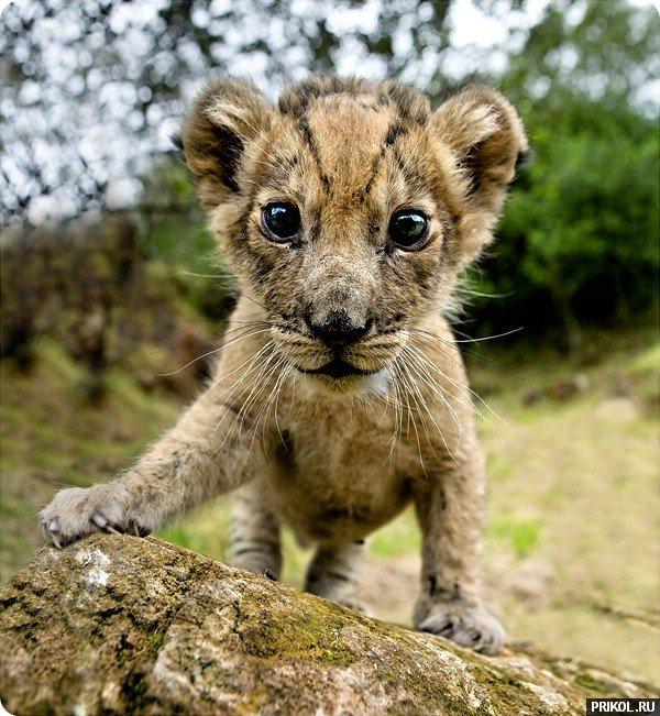 wild-cats-29