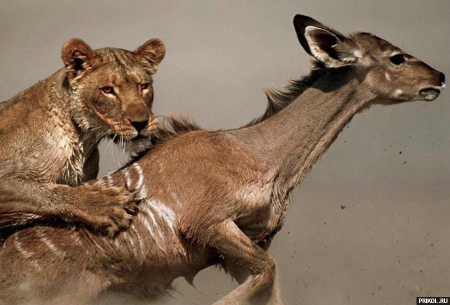 wild-cats-32