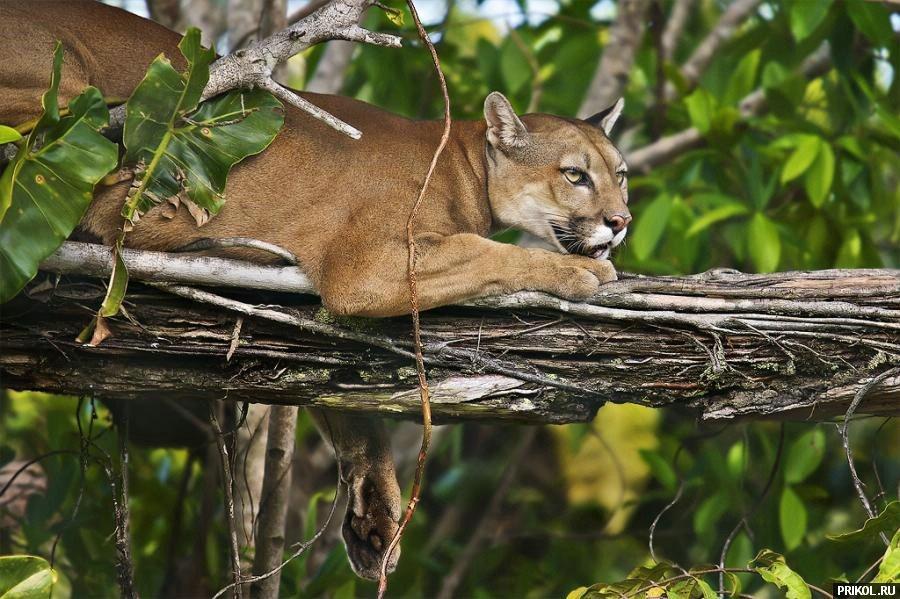 wild-cats-34