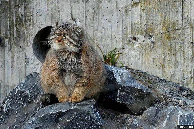 wild-cats-36