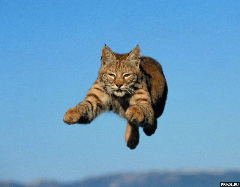 wild-cats-37