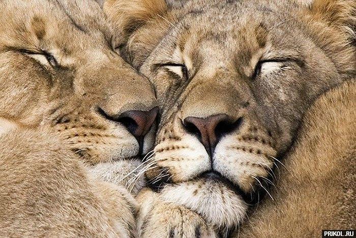 wild-cats-38