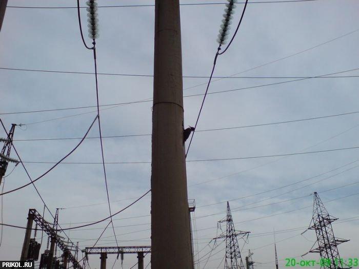 woodpecker-02