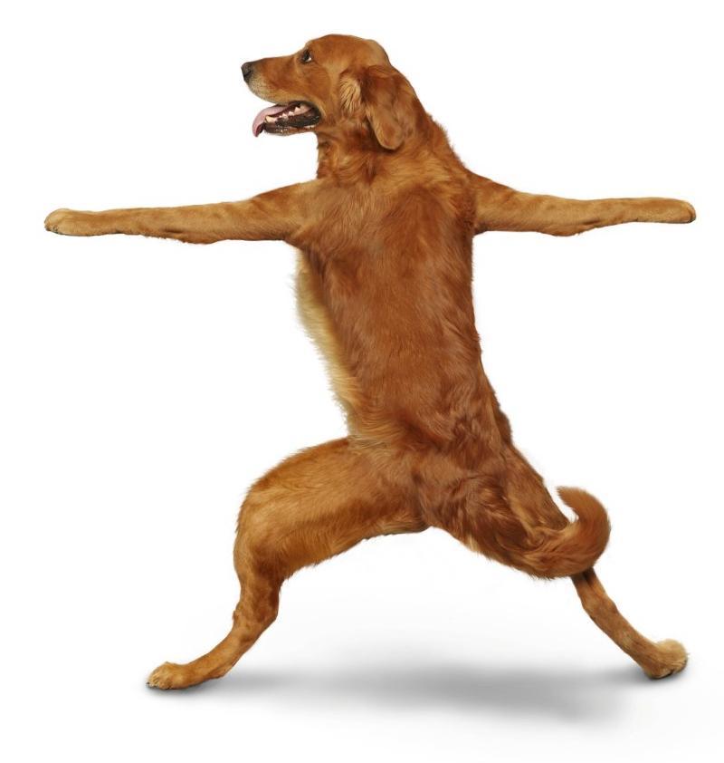 yoga-dogs-04