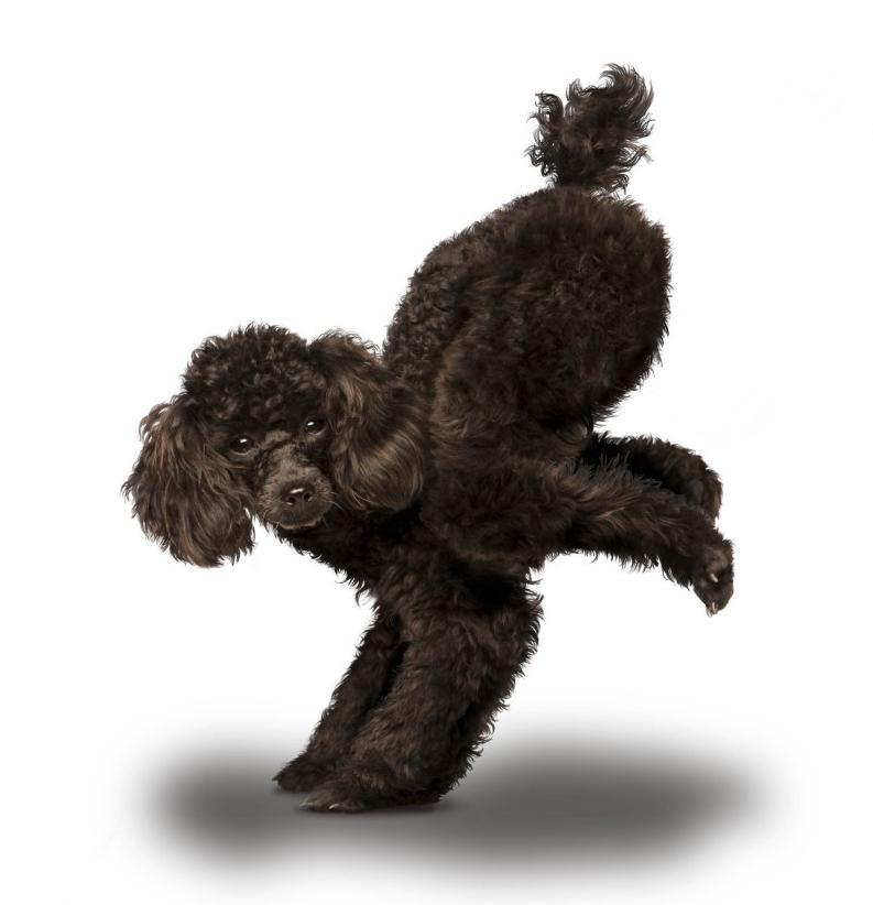yoga-dogs-06