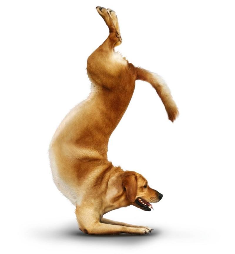 yoga-dogs-08