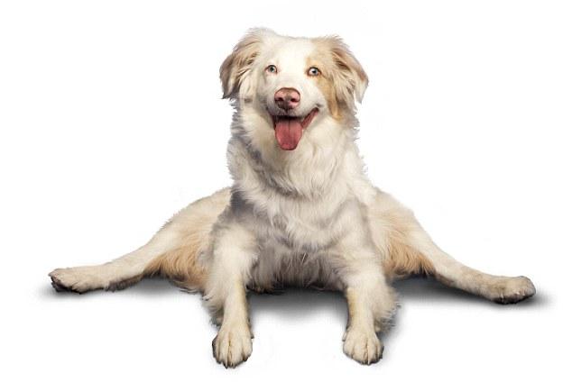 yoga-dogs-10