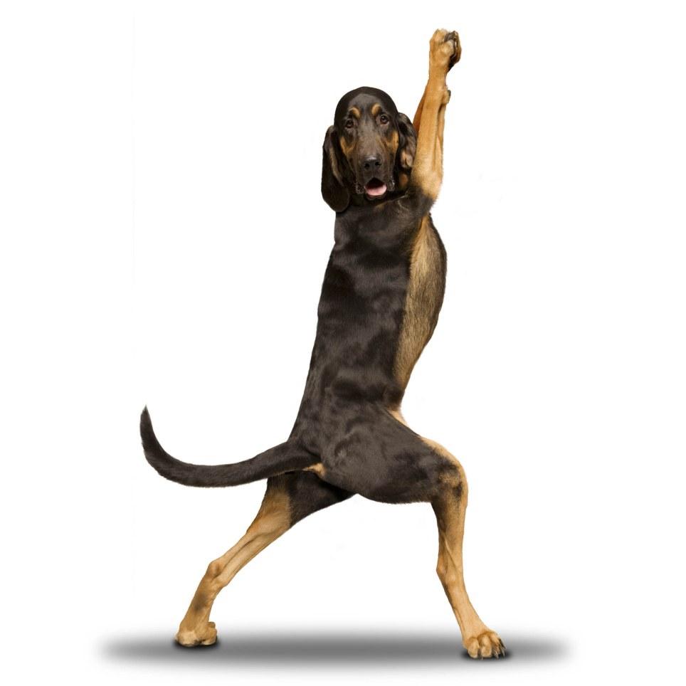 yoga-dogs-11