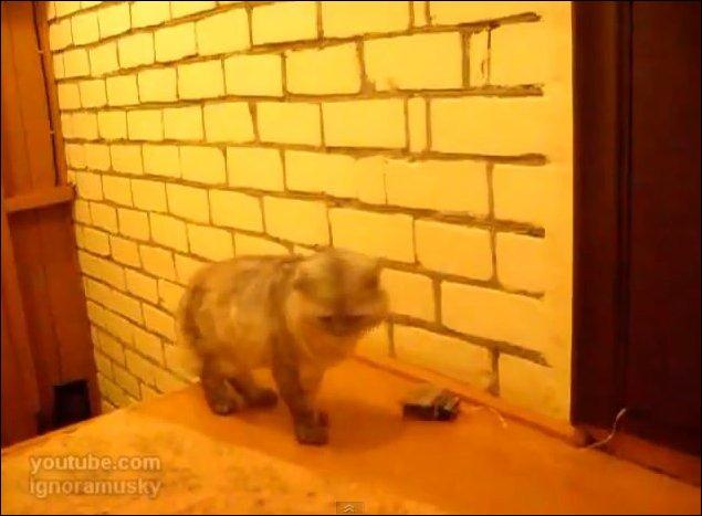 Дверной звонок для кота Персика