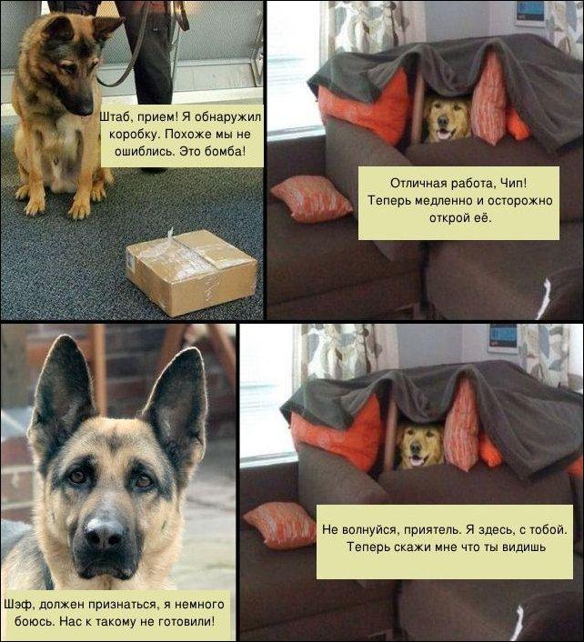 Собаки-саперы