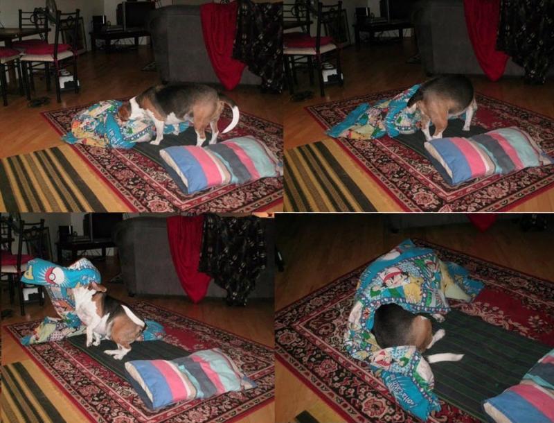 Собака укладывается спать