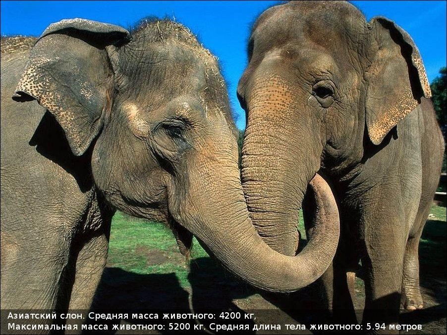 Великаны животного мира