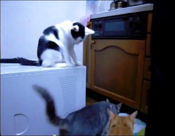 Кошачья подстава