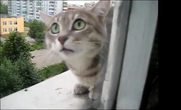 Злой кот за окном