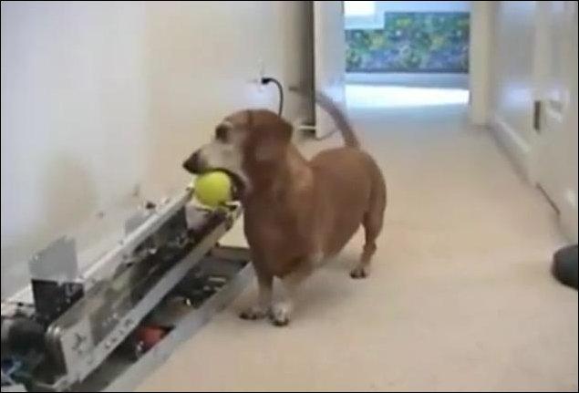 Автоматический собачий развлекатель
