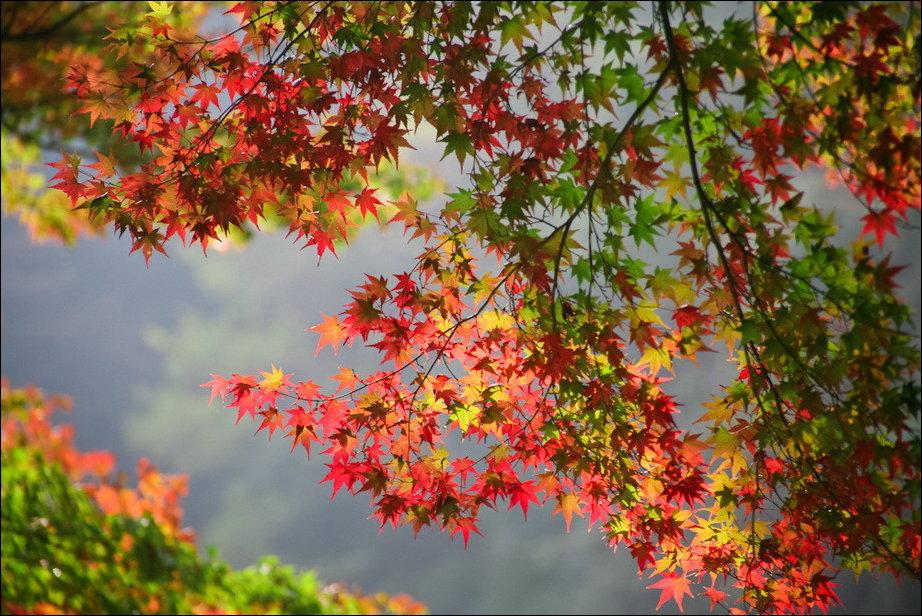 Все краски осени