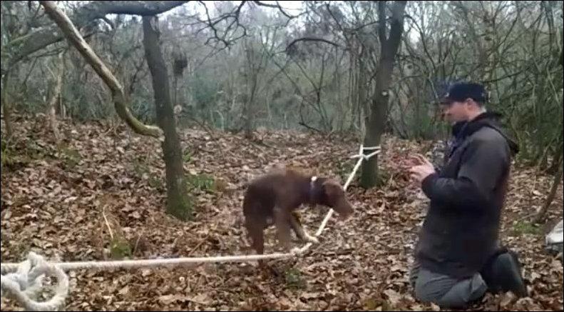 Собака балансирует на канате