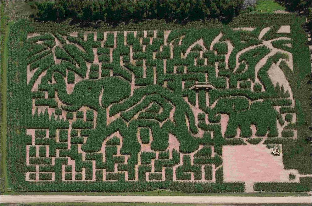 Кукурузный лабиринт