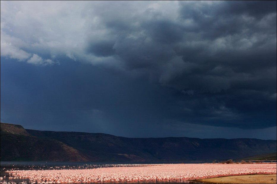 Миллион фламинго