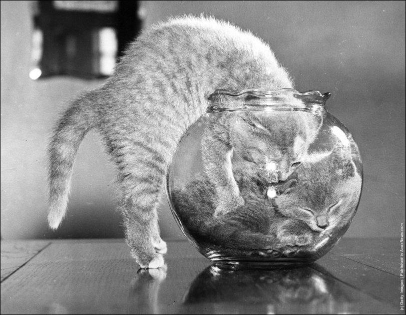 Ретро-коты