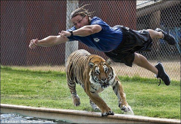 Купание с тиграми