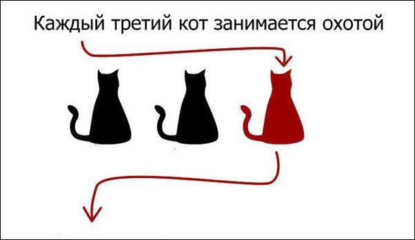 Страшная правда о котах