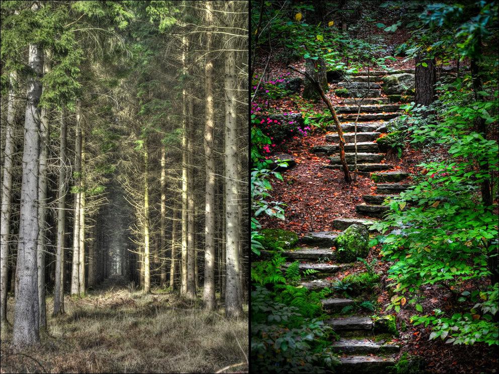 Пугающий лес