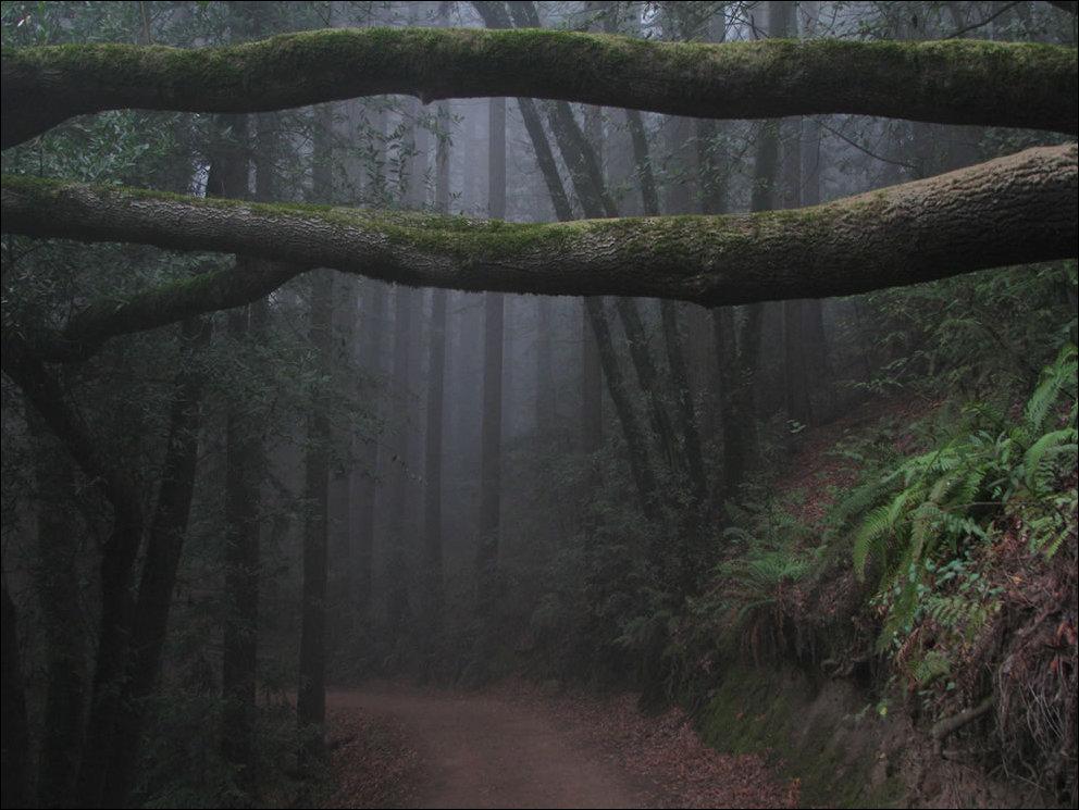 Картинки пугающий лес