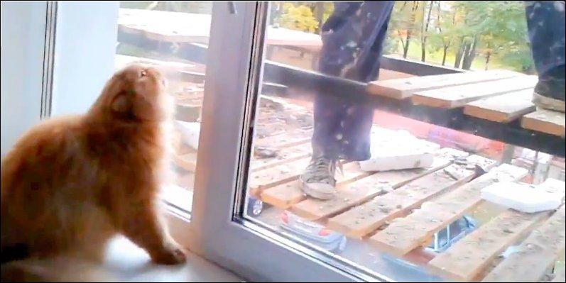 Кот боится и ненавидит рабочего за окном