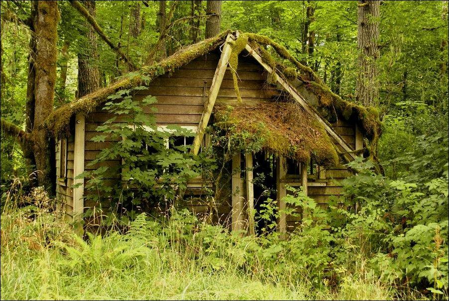 Красивые дома в лесу