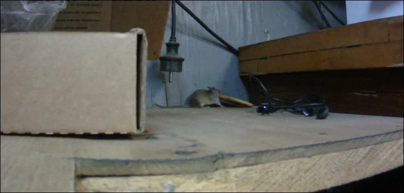 Мышка ворует печенье
