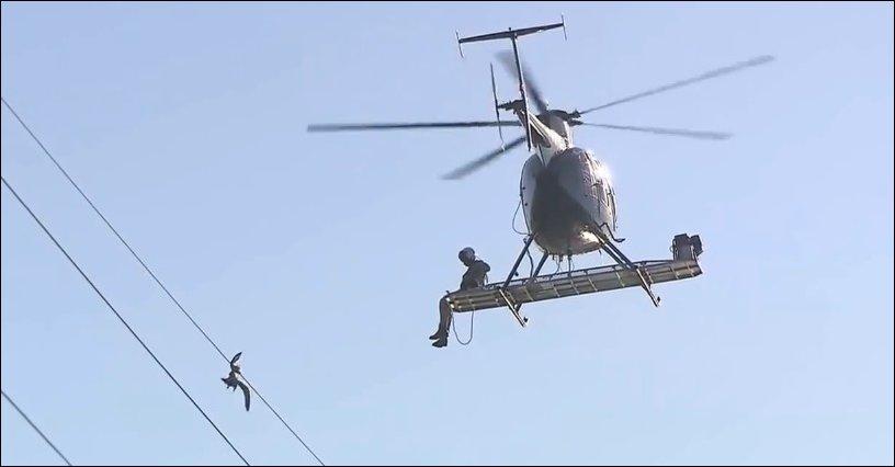 Спасатели на вертолете снимают чайку с ЛЭП