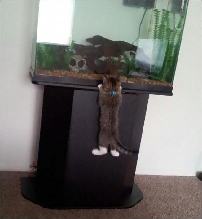 Коты ворюги