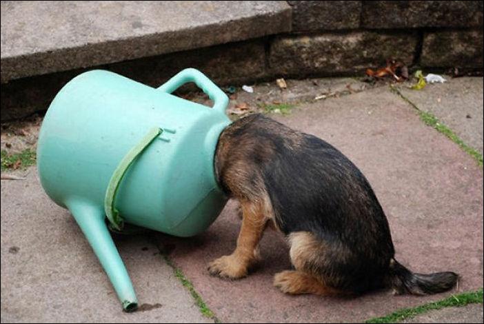 Собачьи проблемы