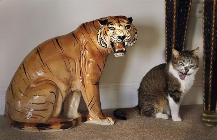 Фото котов