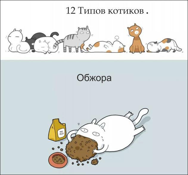 12 типов котов