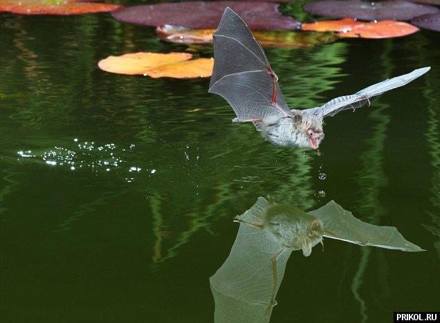 bat-drink-02
