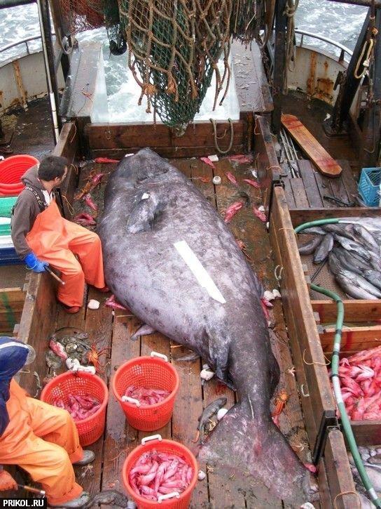 big-fish-01