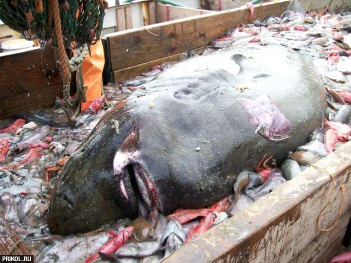 big-fish-02