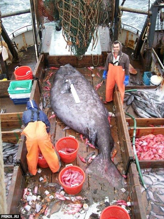 big-fish-03