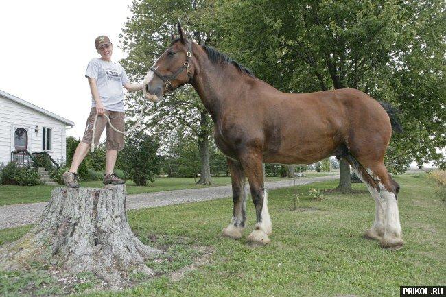 biggest-horse-poe-04