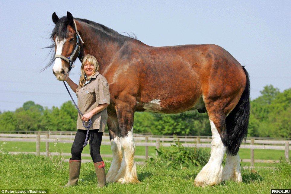 biggest-horse-poe-05