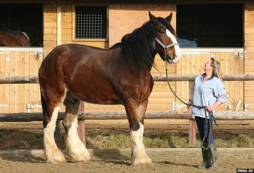 biggest-horse-poe-06