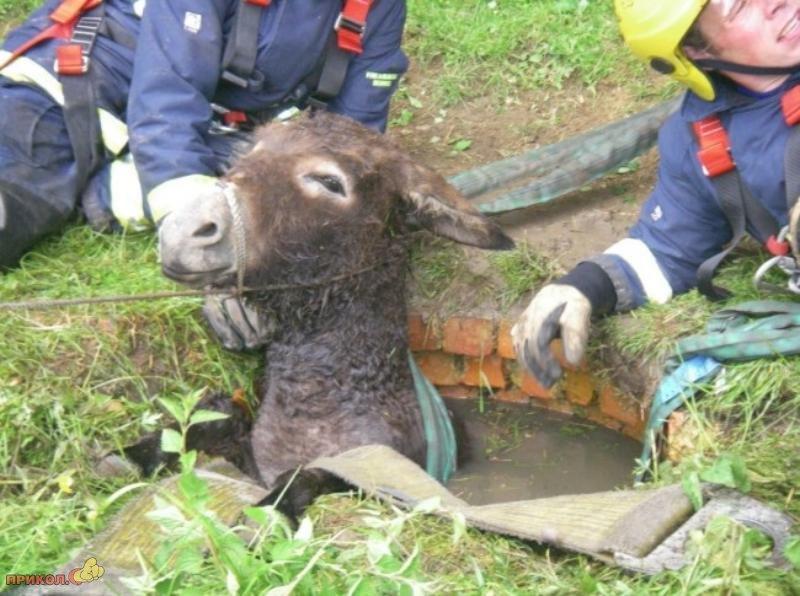 bullock-rescue-06