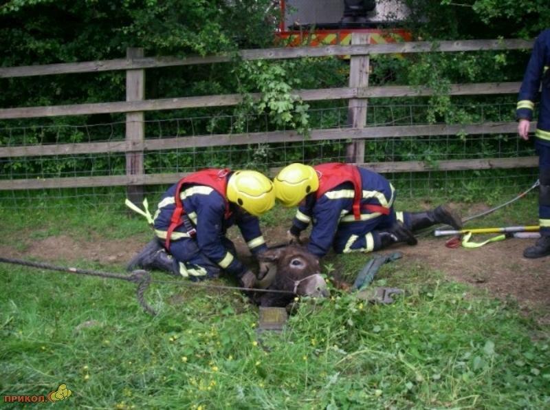 bullock-rescue-07