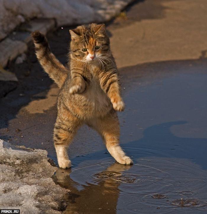 funny-cat-01