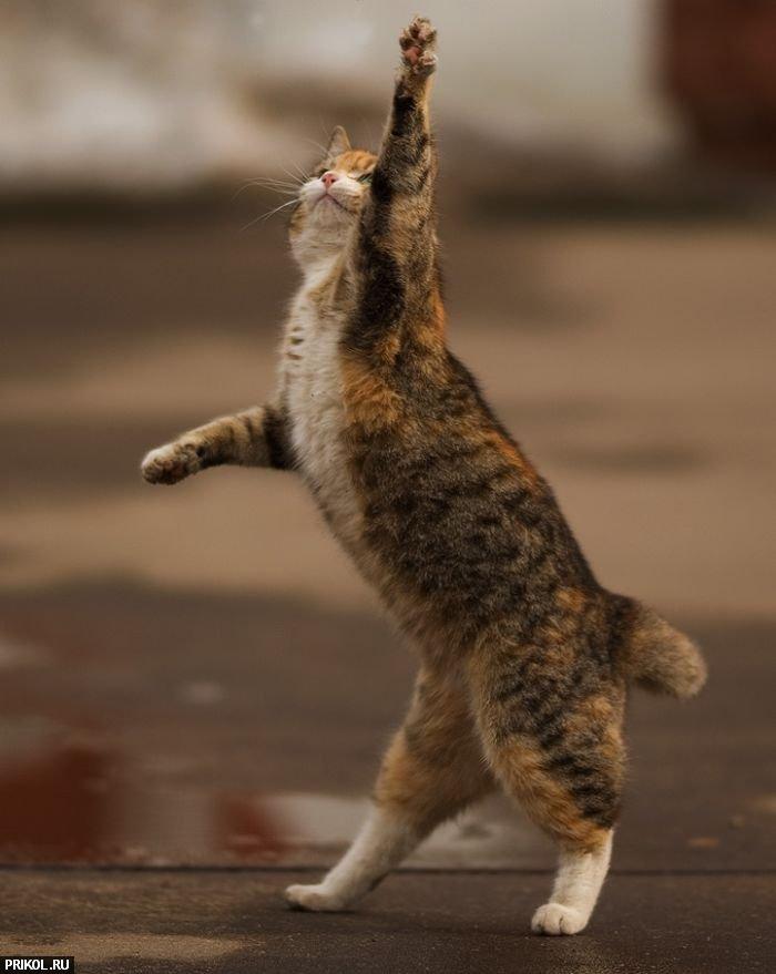 funny-cat-04
