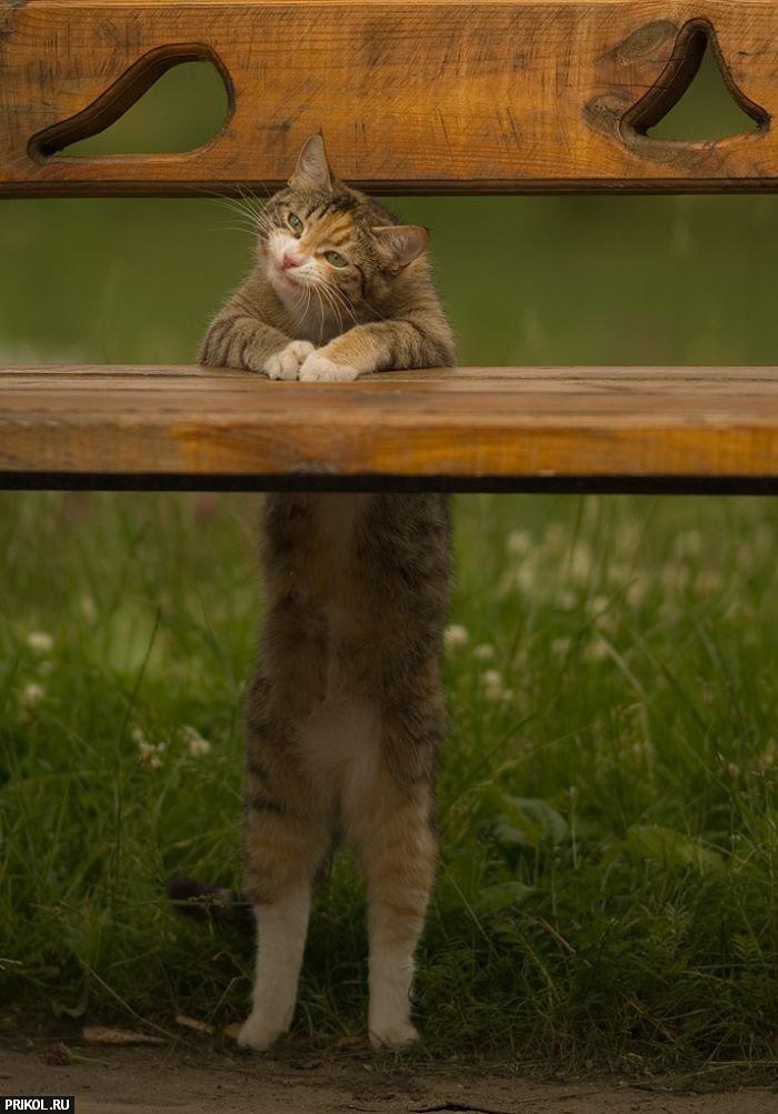 funny-cat-08