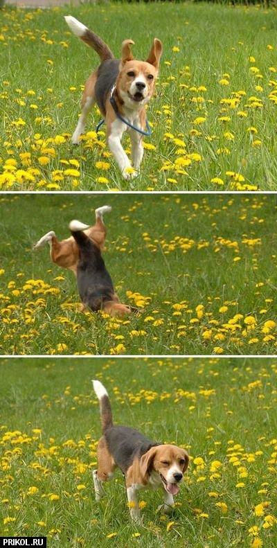 funny-dog-02